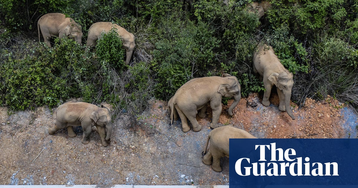 Escaped elephants leave 500km trail of destruction in China