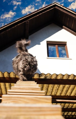 Cat traversing cat ladder from house