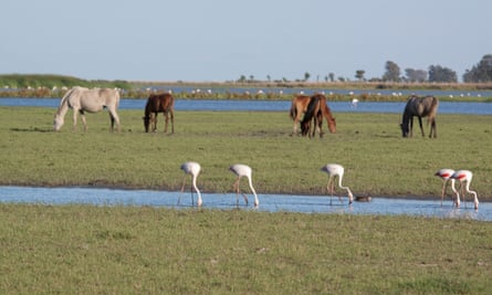 The Doñana national park is home to wild horses and flamingos as well as Iberian lynx