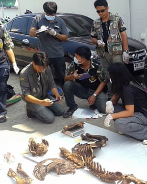 Thai police and wildlife officers inspect a tiger skeleton at a police station in Nakhon Sawan province, Thailand