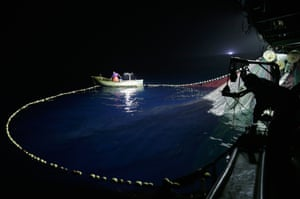 After dark, a second boat with bright lights is used to attract the fish
