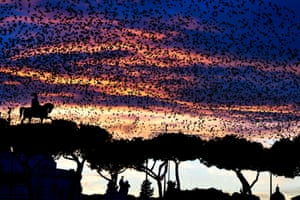 A murmuration of starlings flies over the Altare della Patria monument in Rome. Authorities have enlisted falcons to scare off defecating starlings, as the Italian capital plays host to a growing menagerie of animals, including gulls, wild boars and sheep.