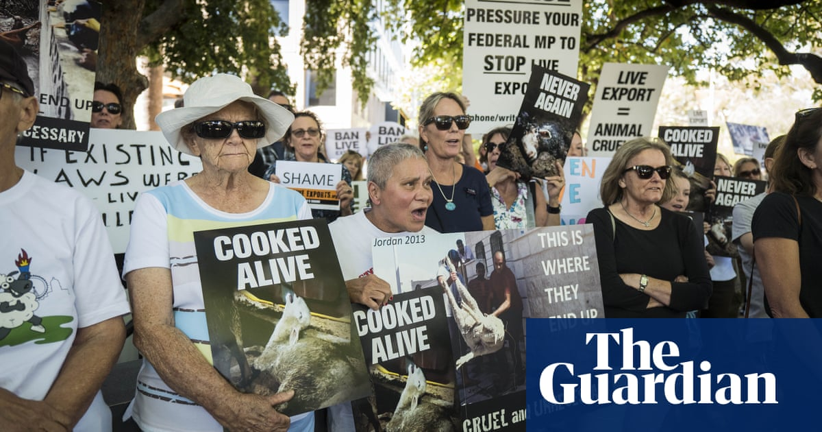 Live exports: mass animal deaths going unpunished as holes