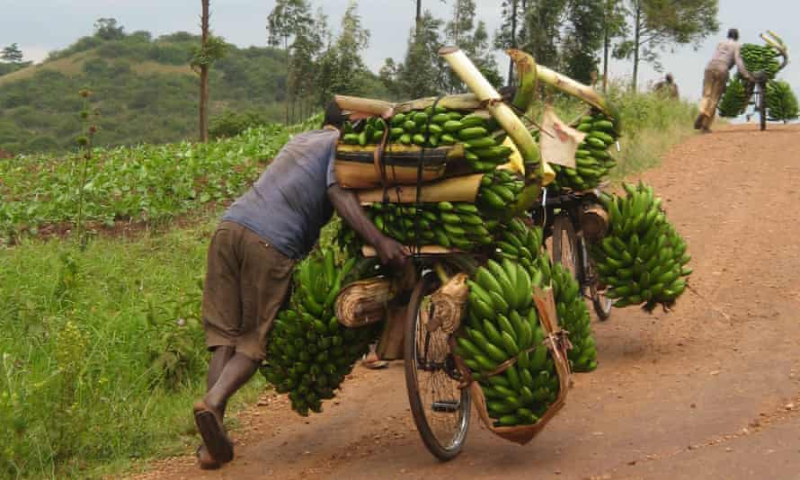 A man takes his banana crop to market along the Kampala–Mbarara road, Uganda.
