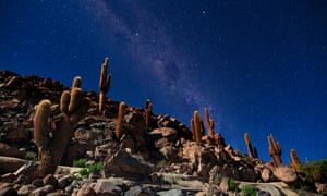 Chile.Stars and a cactus forest in a moonlit night in the Atacama Desert.