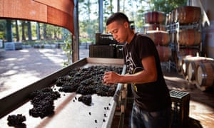 A sustainable winery at South Africa's most famous wine-growing region, Stellenbosch.
