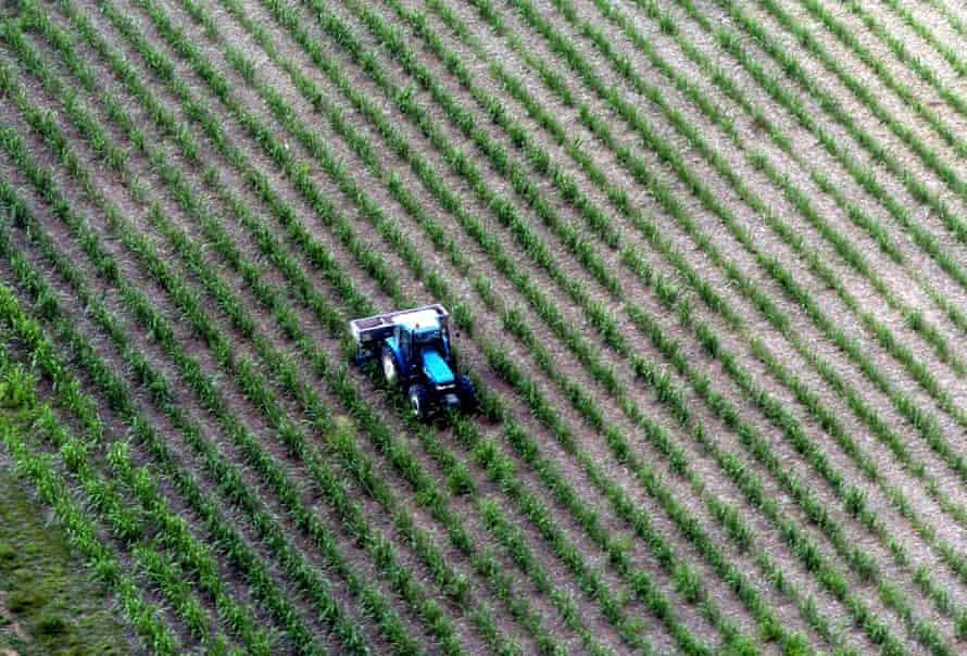 Aerial view of sugar cane growing in the Bundaberg region in Queensland.