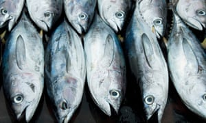 Preliminary DNA tests suggested some of the company's yellowfin tuna were likely to have come from the other side of the world.