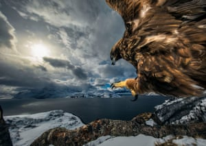 Birds behaviour winner: Land of the Eagle by Audun Rikardsen, Norway