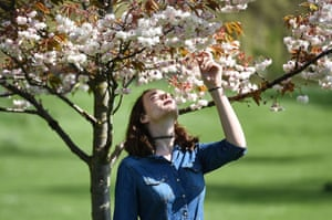 A young woman inspects a tree's blossom