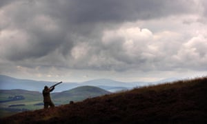 A gamekeeper on a Scottish grouse moor