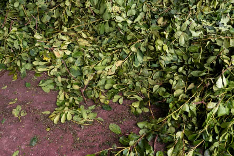 Yerba mate is one of the ancestral plants that are most consumed throughout the country. Regardless of the weather, there is always a suitable drink made of this product.