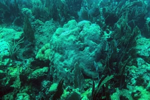Dead coral sit on the ocean bed in the Strait of Florida near Key Largo