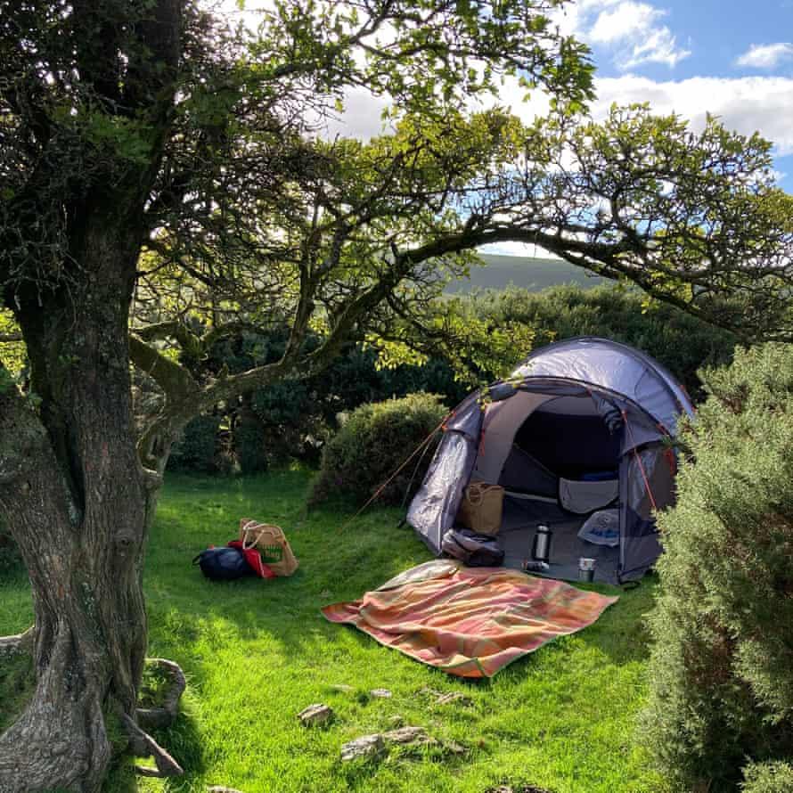 چادر روی چمن ها در گوشه ای بین درخت و گیاه خارپشت
