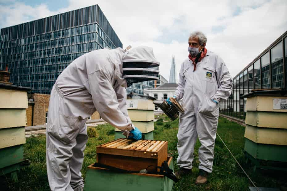 Beekeepers Pavlin Ivanov and Dale Gibson at Bermondsey Street Bees inspects hives at a hotel in central London