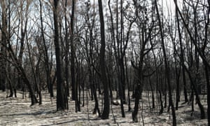 Charred forest near Batemans Bay, New South Wales