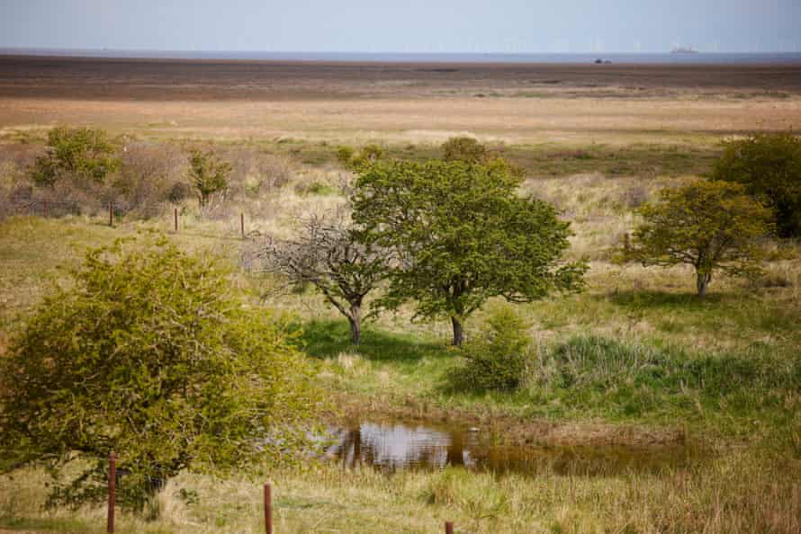 At Saltfleetby-Theddlethorpe, 3.6 hectares of dense scrub has been cleared to stop it choking local vegetation, such as hawthorn and alder.
