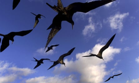 A group of frigate birds fly over San Cristobal islands in the Galapagos Archipelago.