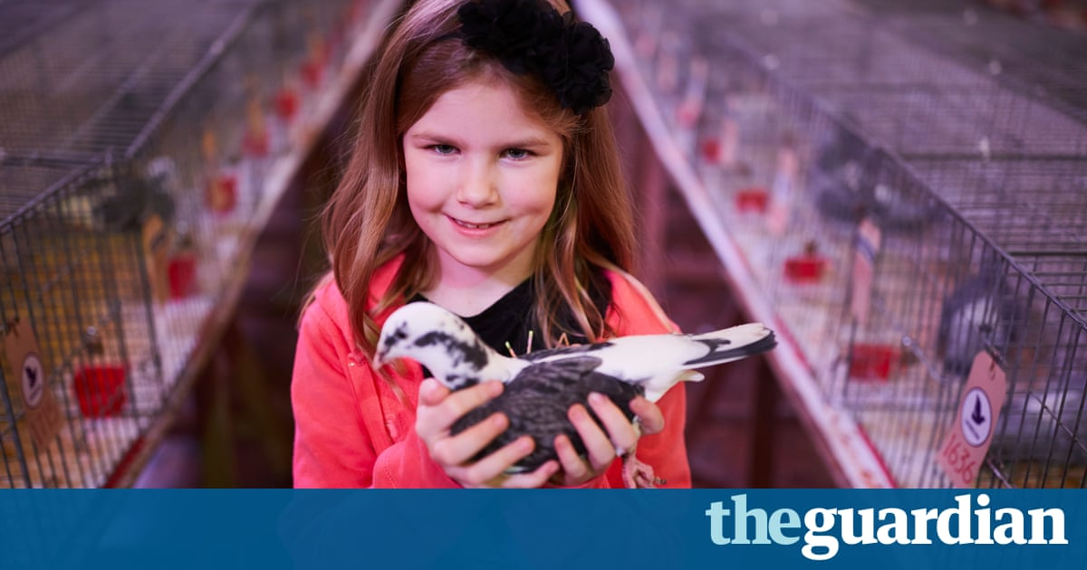 The Crufts of pigeon fancying  photo essay