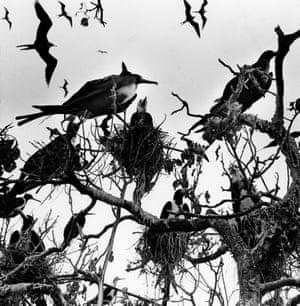 El Señor de Los Pájaros, Nayarit, 1984