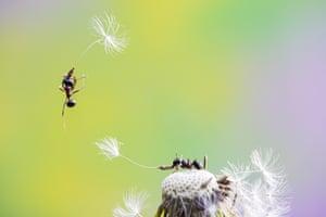 Close-ups of Nature, finalist Airway for Ants by Fabio Sartori, taken in Lago Boracifero, Italy