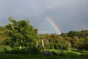 A rainbow over Fern Verrow's orchard.