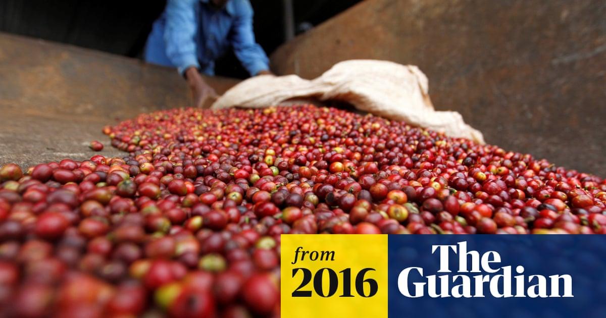 Kenyas Coffee Thefts Blamed On Organised Cartels Guardian