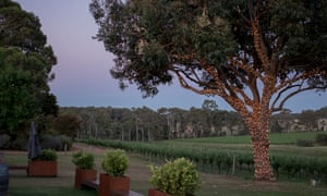 View over the vineyard at dusk at Hay Shed Hill, Margaret River, Australia.