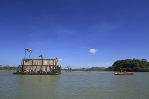 An endangered Rothschild's giraffe is floated on a custom-built barge from Longicharo island to safety on the eastern shores of Lake Baringo.