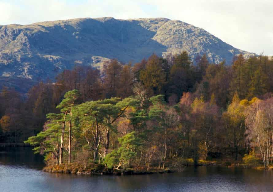Trees full of fall colors at Tarn Hows, with the bare slopes of Wetherlam in the background.
