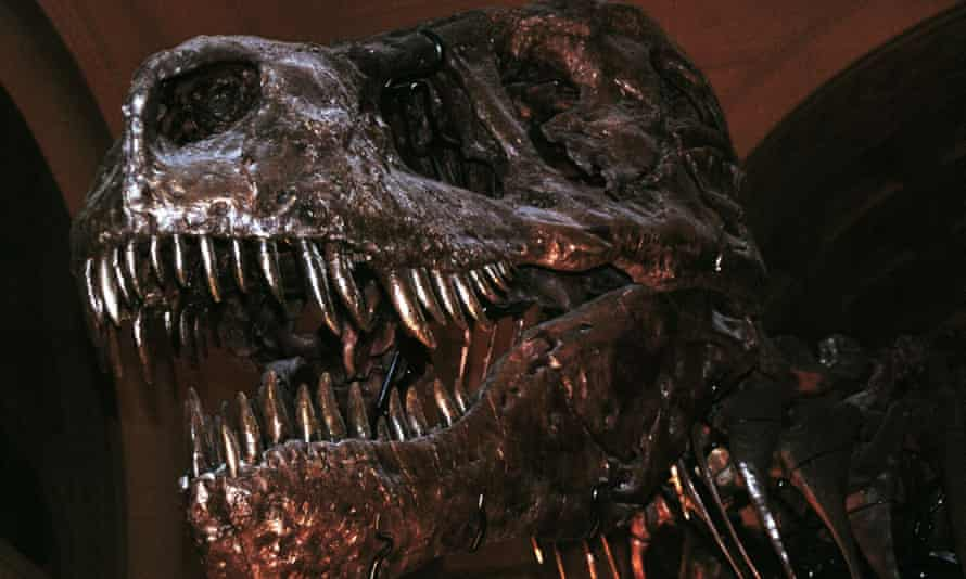 Tyrannosaurus rex 'Sue': the largest, most complete and best preserved T. rex ever found.