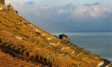 The hills are alive: slopes planted in Lavaux on the shores of Lake Geneva. The wine terraces are a Unesco world heritage site.