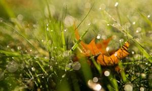 autumn leaf in dewy grass