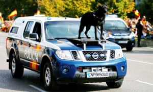 A police dog rides on a patrol car during celebrations to mark National Day in Madrid