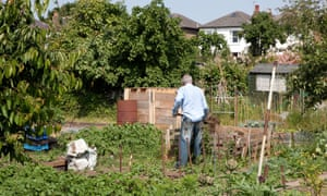 Working on an allotment in London