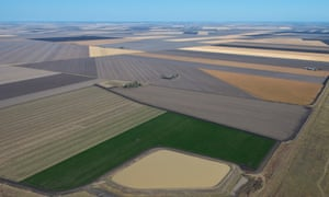 Agricultural crops on the Darling Downs of southern Queensland.