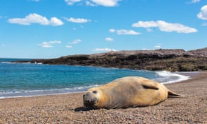 A sea lion on the beach at Cabo Raso village, Patagonia, Argentina