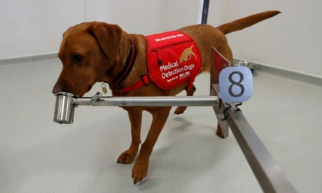 UK researchers hope dogs can be trained to detect coronavirus
