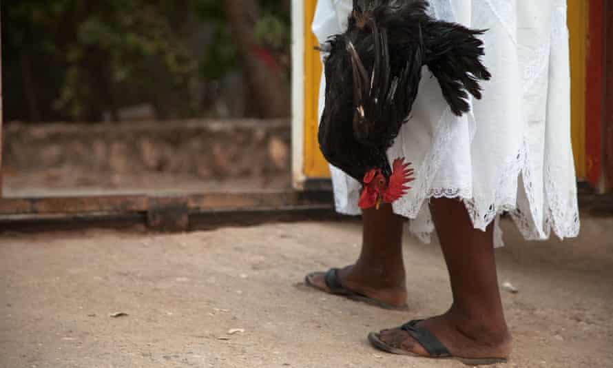 Animal sacrifices are still common during Vodou ceremonies.
