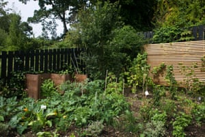 Part of the Energy Garden at Brondesbury Park Station with courgettes, herbs and fruits. The gardens are watered with collected rain water and the pump is powered with a solar panel.