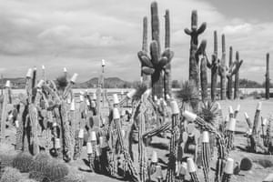 Winter cactus garden, 1992. Paper cups to protect against night frosts.