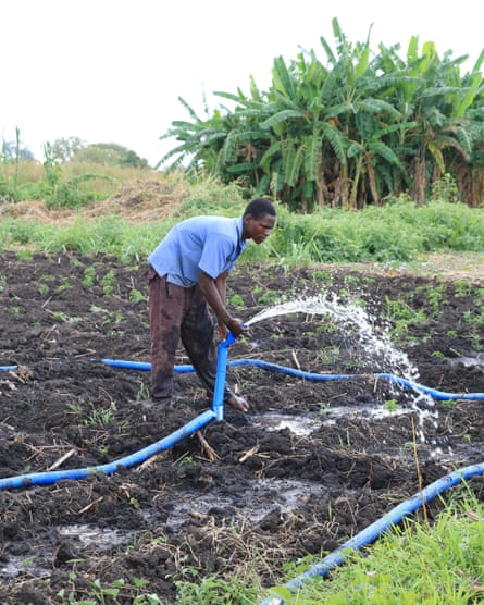 A farmer tries to grow crops with the help of a United Nations supported irrigation scheme in the Neno district of Malawi.