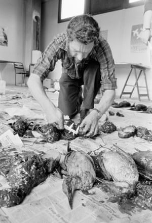 Peter Hope Jones devised a system for collecting bodies of oiled birds to be measured, aged and sexed, and he was seconded in 1978 to help with the Amoco Cadiz oil spill.
