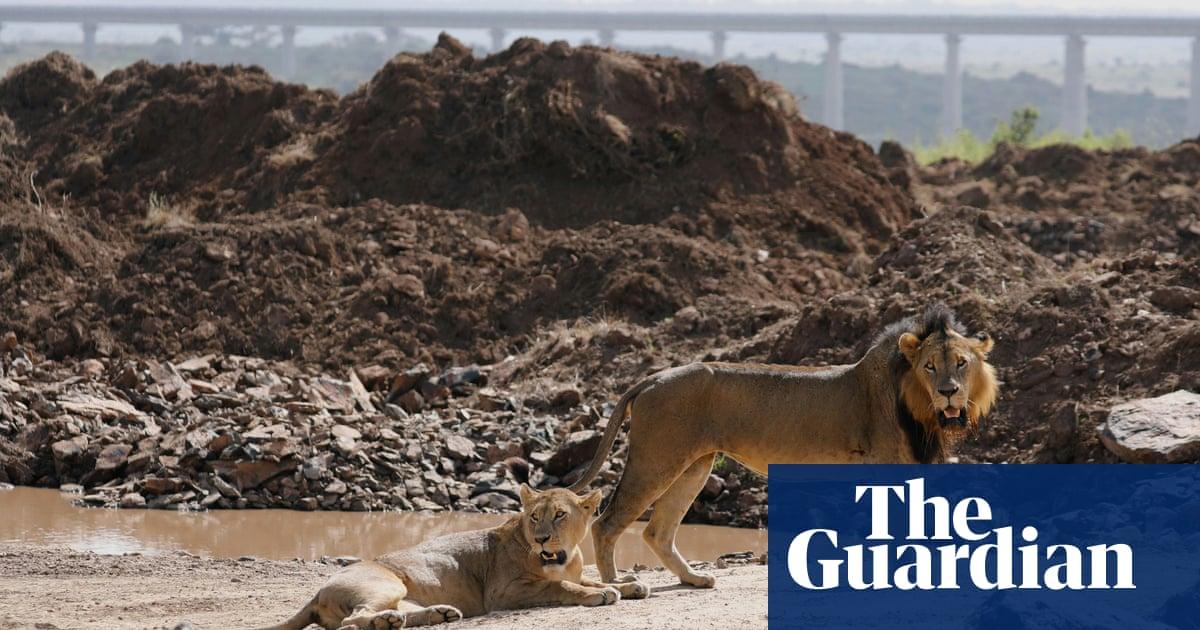 Halt destruction of nature or risk 'dead planet', leading businesses warn
