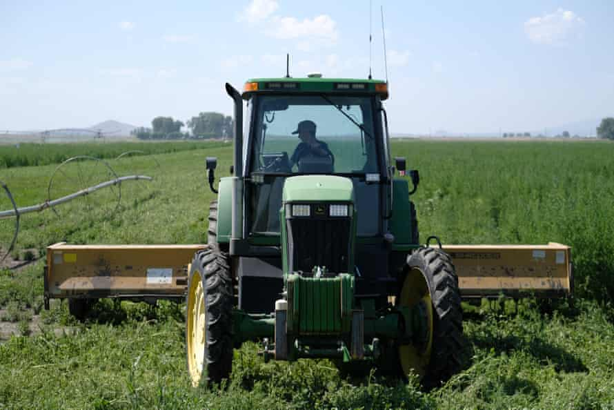 Spencer Seus drives a tractor to cut weeds in a field of mint in Tulelake, California.