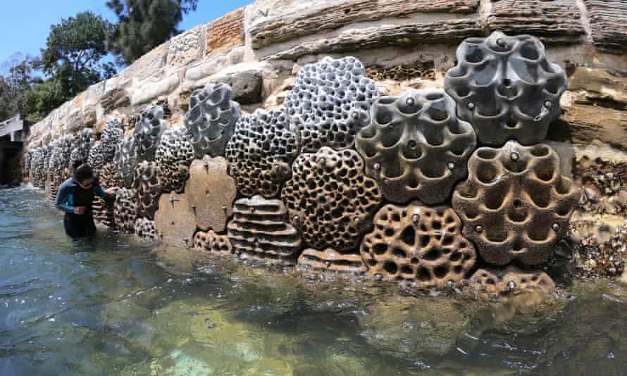 The Modular Artificial Reef Structure designed by artist Alex Goad