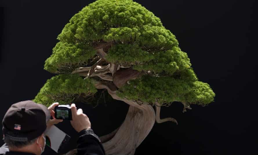 A bonsai displayed at a world bonsai convention in Saitama, Japan, in May 2017