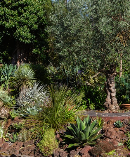 Photograph of yucca-leaved beschorneria, Thompson's yucca, pink torch puya, whale's tongue agave, toothless sotol and mountain agave