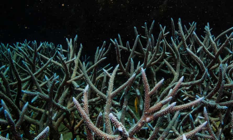spiky coral in black water