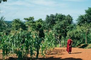 Buddharakkhita in fields near the centre